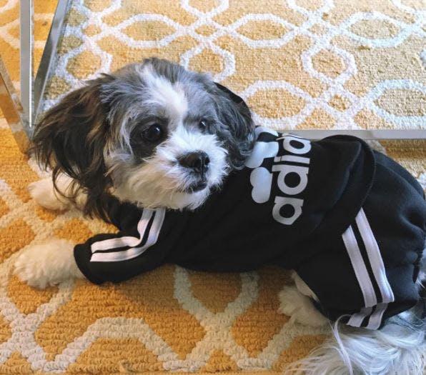 This pup looks pretty fresh!