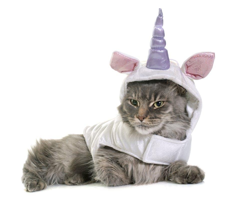A cat dressed as a unicorn