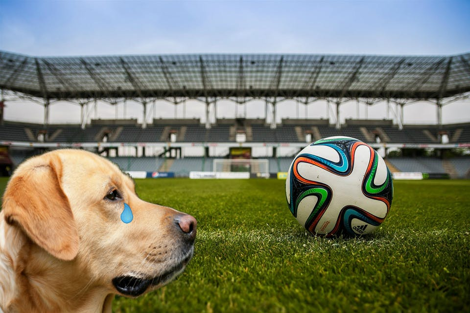This is a dog looking at a football and feeling sad