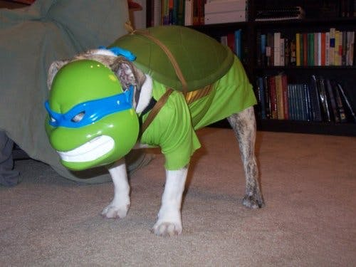 TMNT Dog