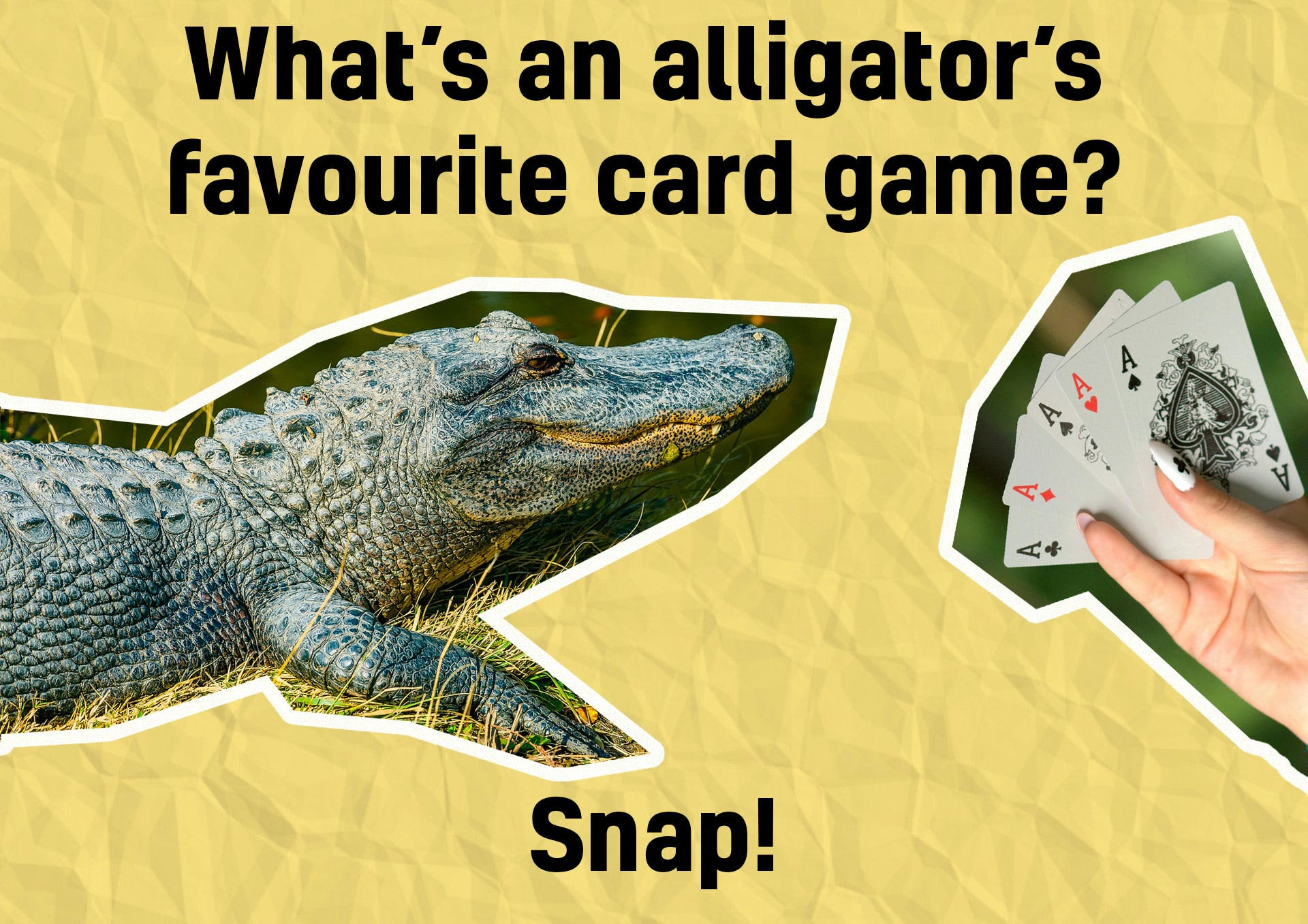 Alligator joke