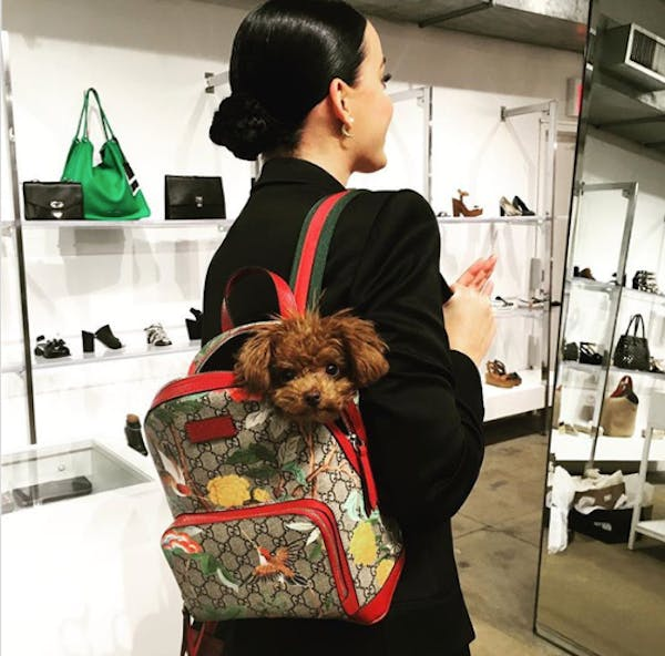 Katy Perry's dog Butters likes to follow her wherever she goes – even in a bag