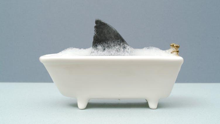 A shark in the bath