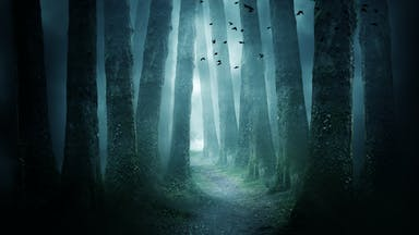 A spooky forest
