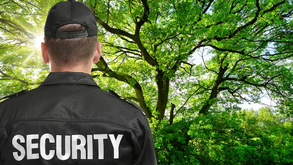 A security guard protecting a tree