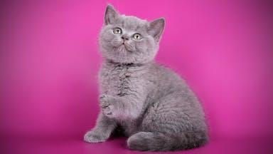 A tiny kitten