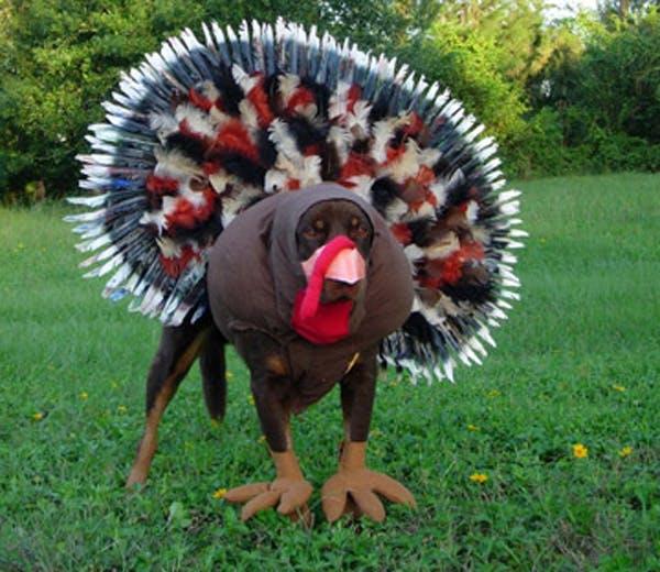 Dog turkey