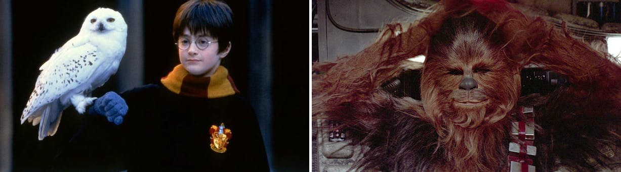 Harry Potter's Hedwig vs Chewbacca