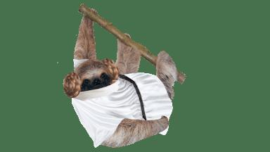 Princess Leia Sloth