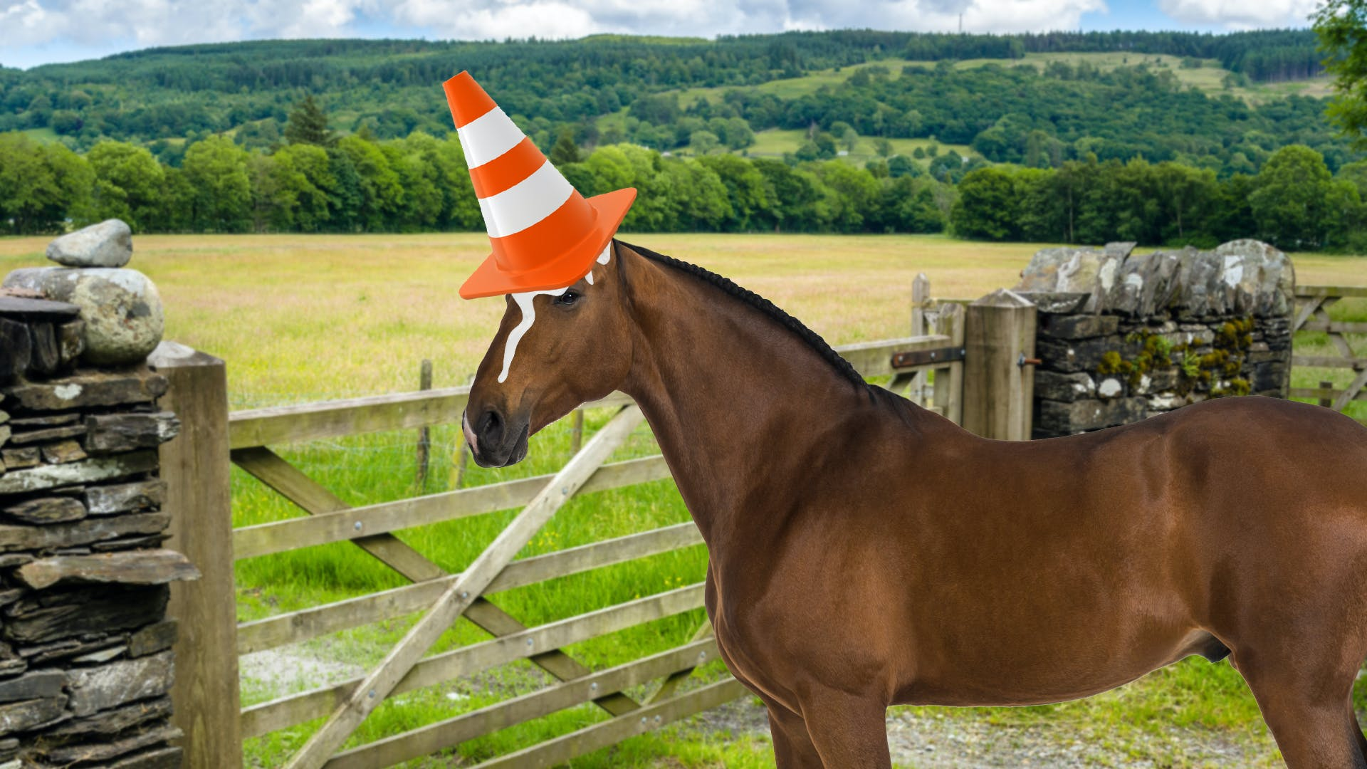 horse with a traffic cone glued to it's head