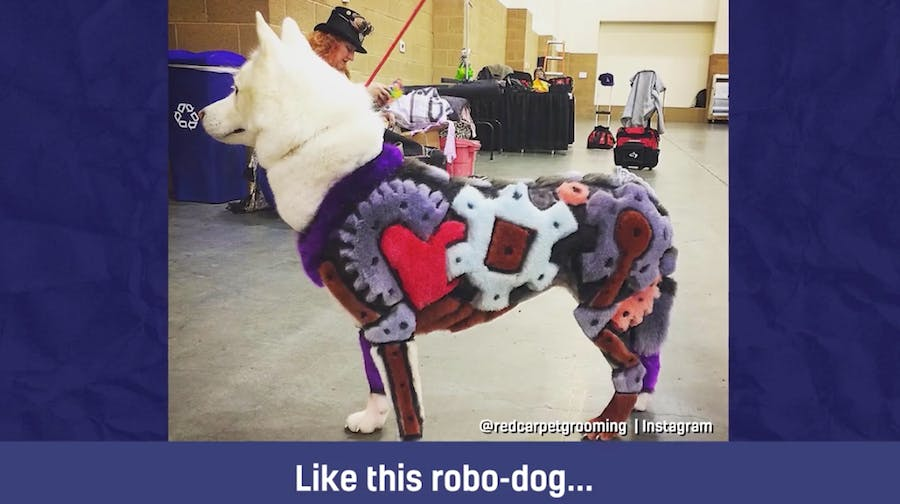 A dog with its hair styled to look like a robot