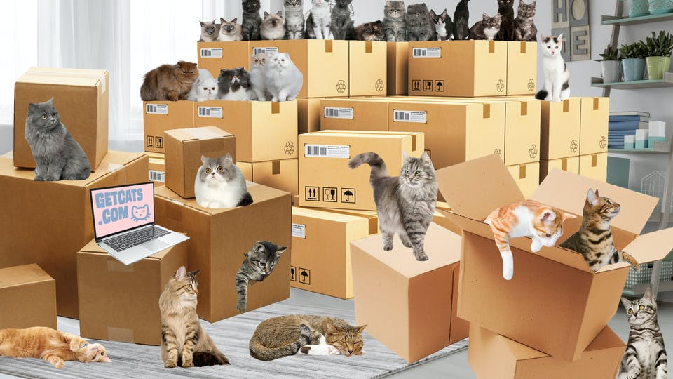 A million cats ordered from the internet