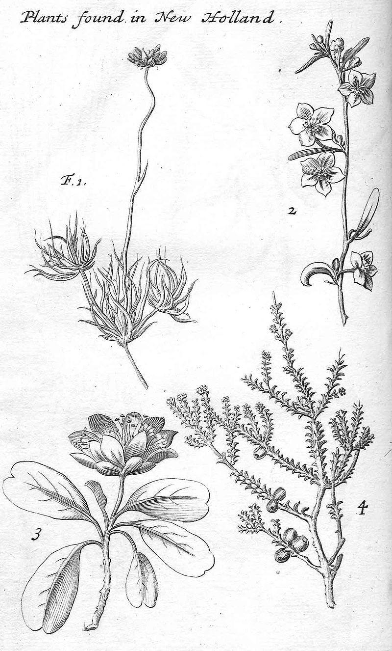 William Dampier's nature artwork