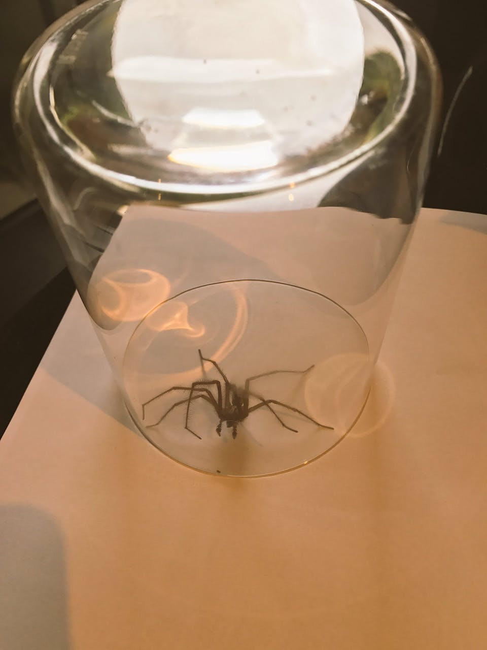 J.K. Rowling's other spider