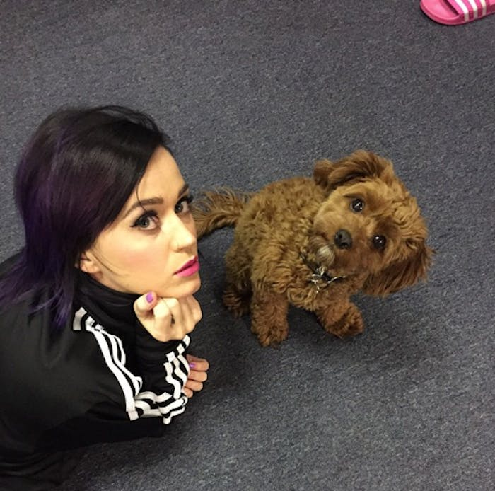 Butters helps Katy plan her Superbowl performance in this Instagram snap