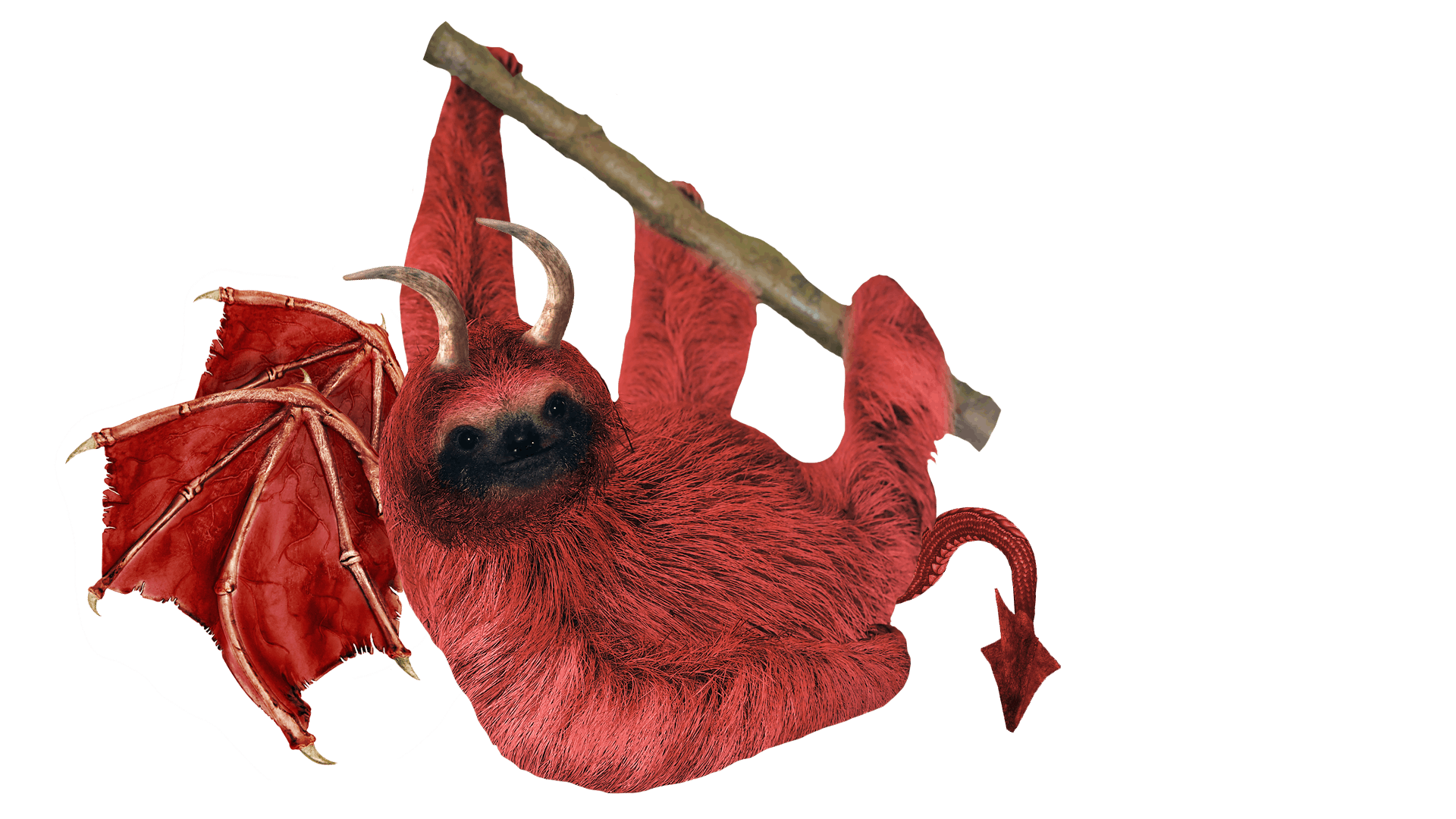 Dragon sloth