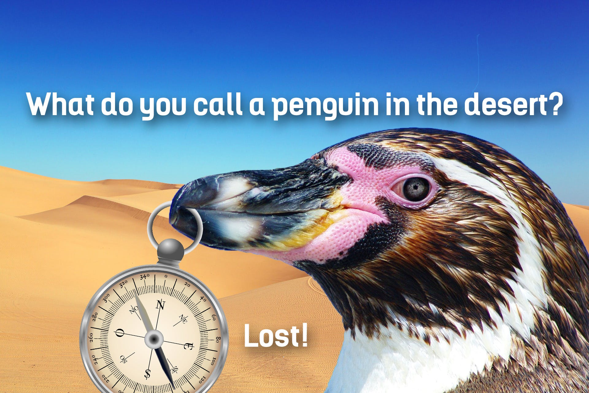 This is a joke about a penguin in an unusual situation