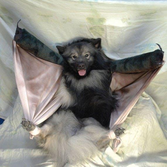 Dog bat