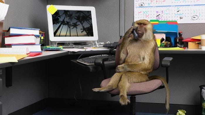 Busy Animals Weird Amp Funny Animals On Beano Com
