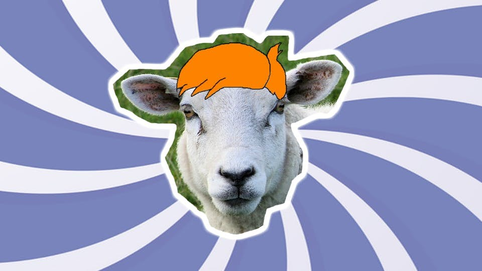 Where do sheep go to get their hair cut? A sheep with a funny hair style.
