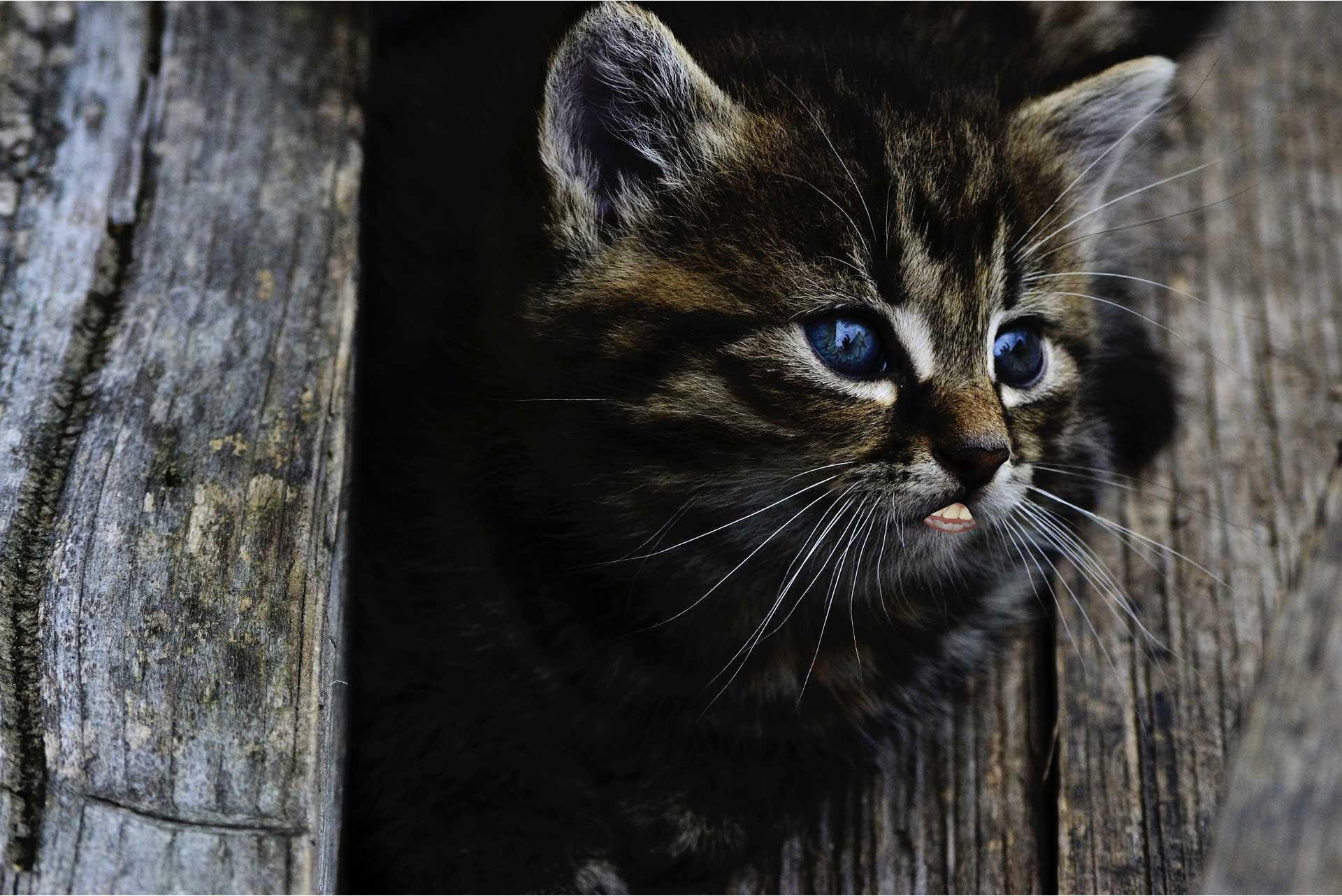 Adorable kitten with human mouth