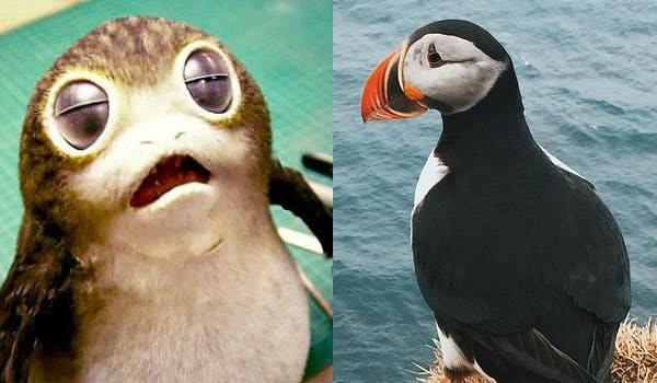 Porgs and puffins