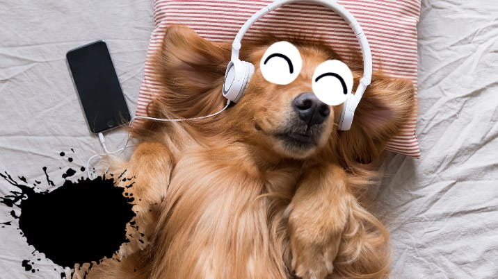 Dog listening to headphones