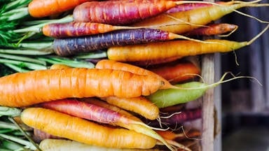 Different varieties of carrot