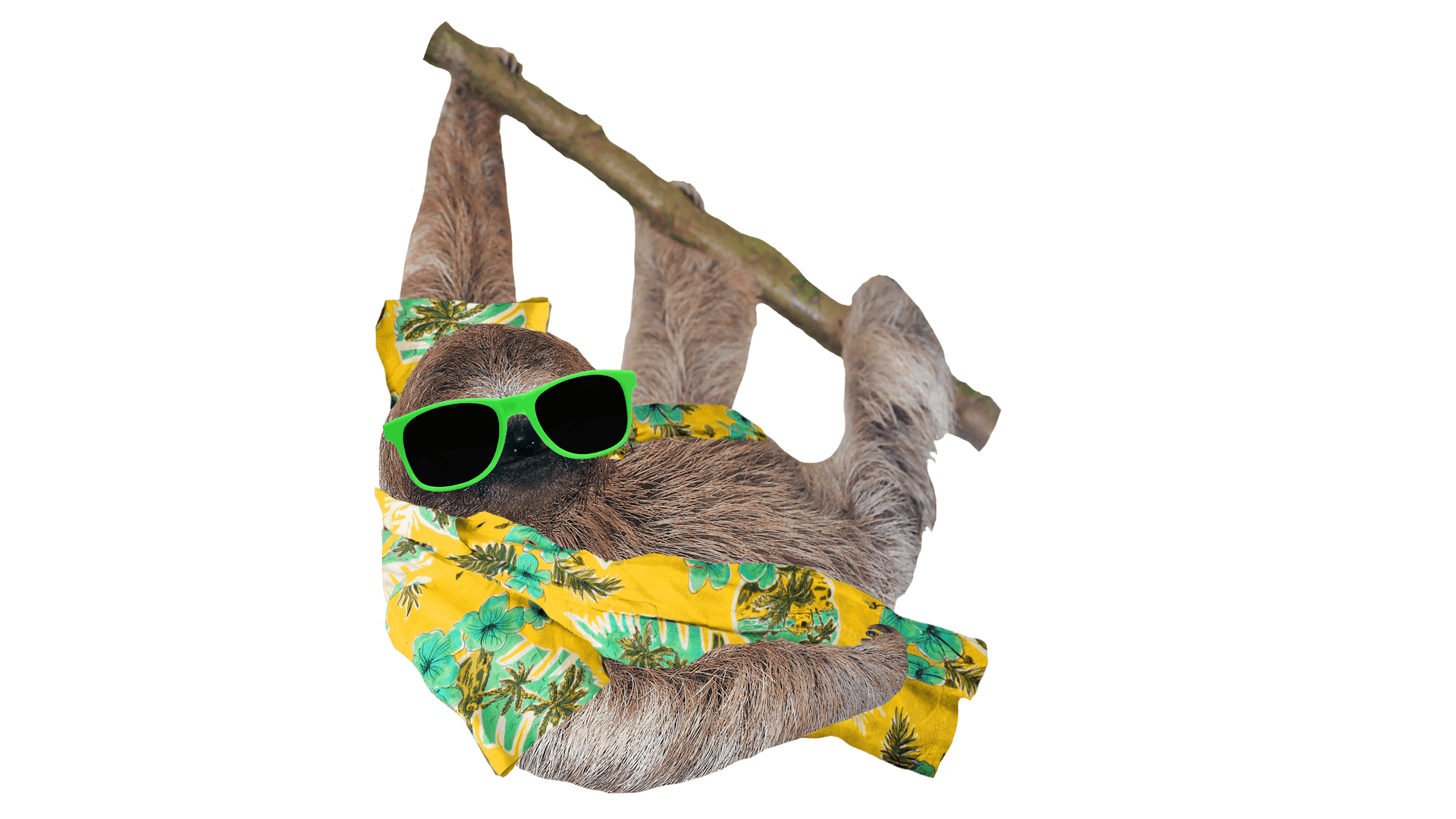 Sloth in a shades and a holiday shirt