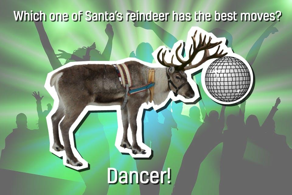 Reindeer on the dance floor