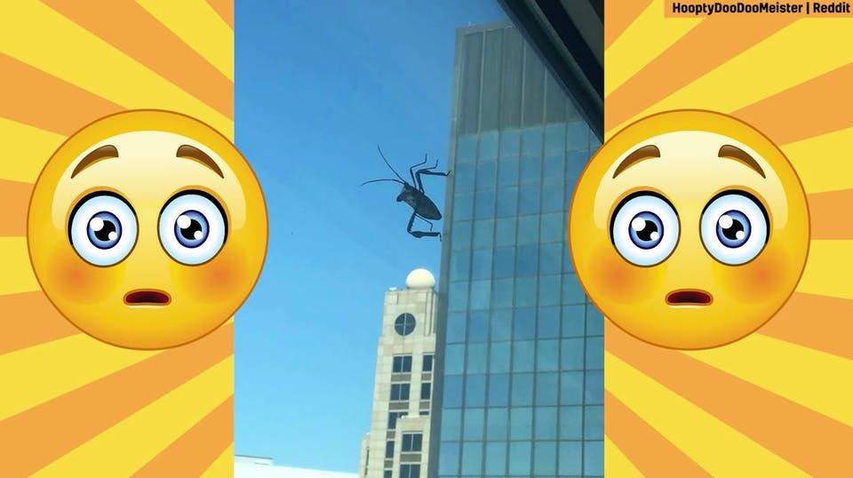 A bug walking up the side of a skyscraper