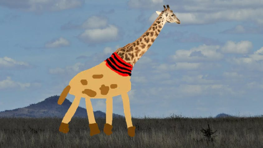 Giraffe wearing a red and black scarf