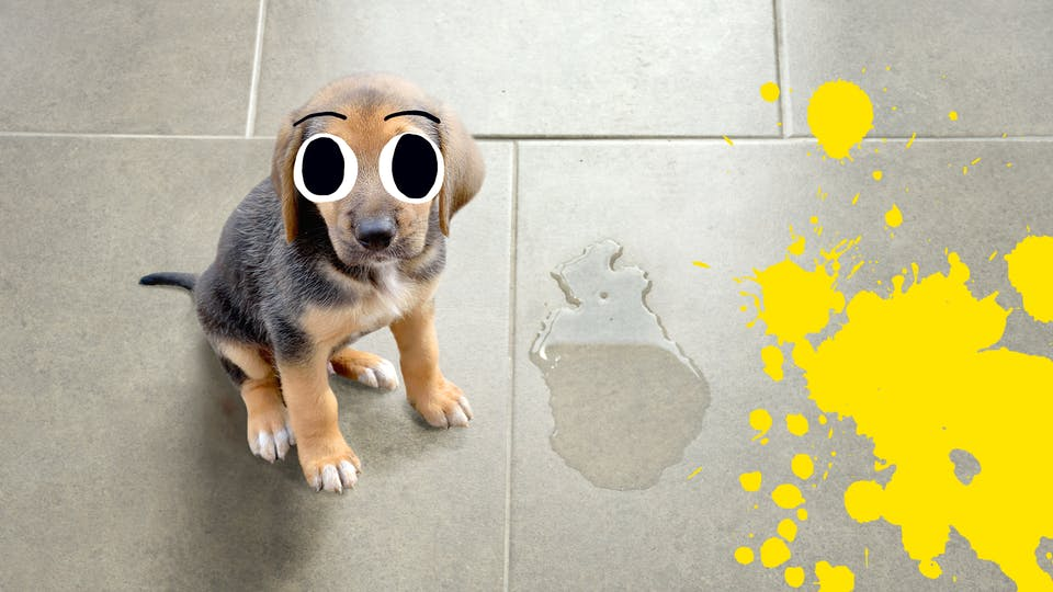 Puppy next to puddle