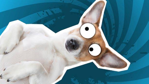 Image result for funny dog jokes