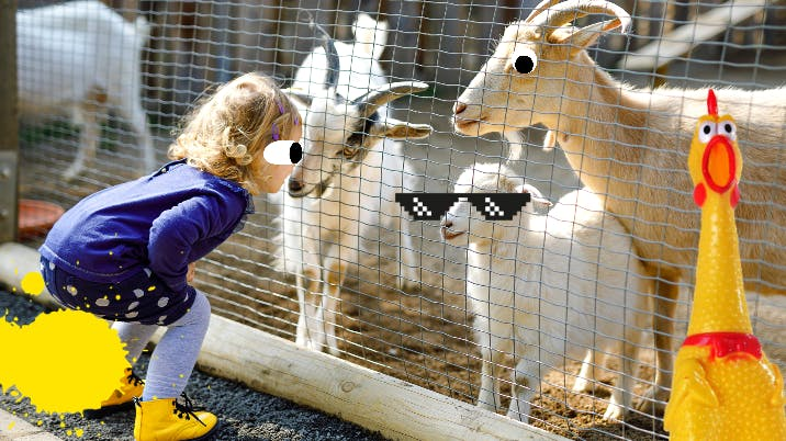 Girl looking at goats through cage