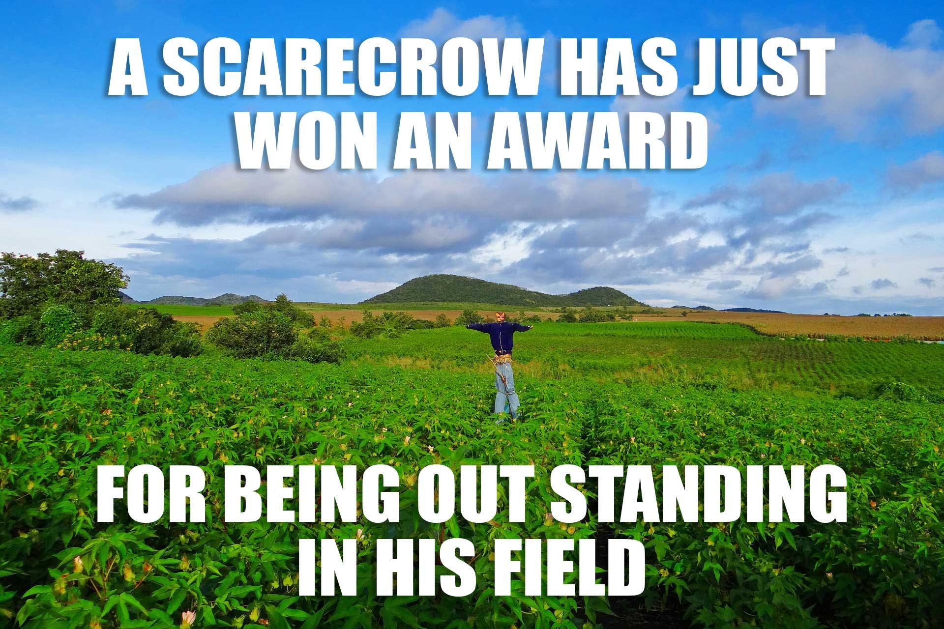 A scarecrow has won an award