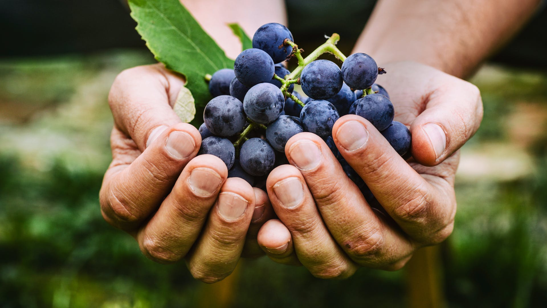 A handful of grapes