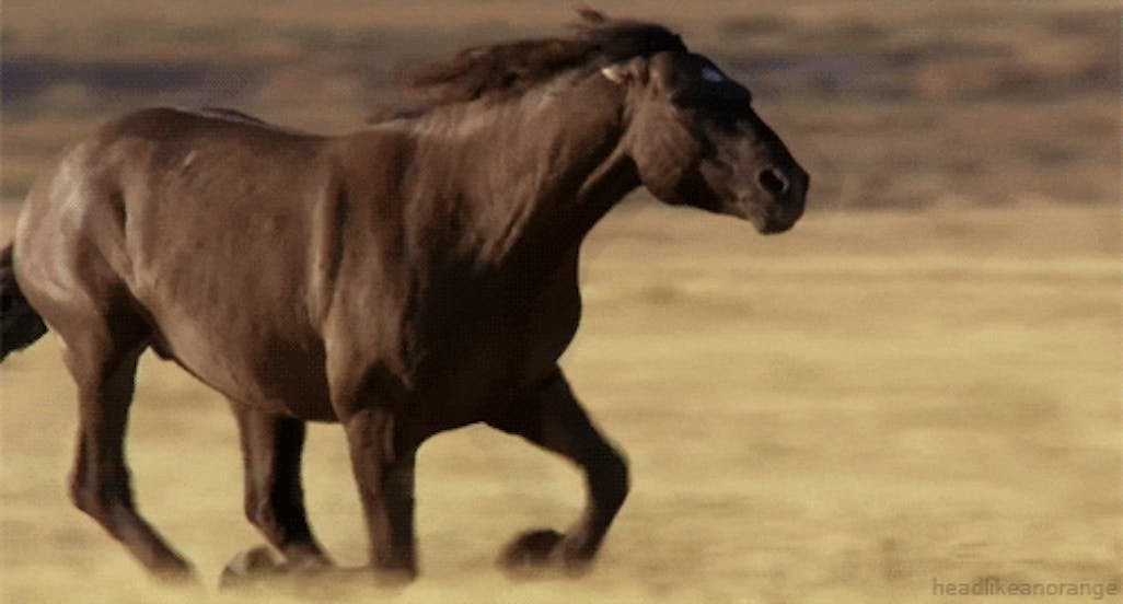 What Horse Breed Am I? | Horse Personality Quiz | Beano com