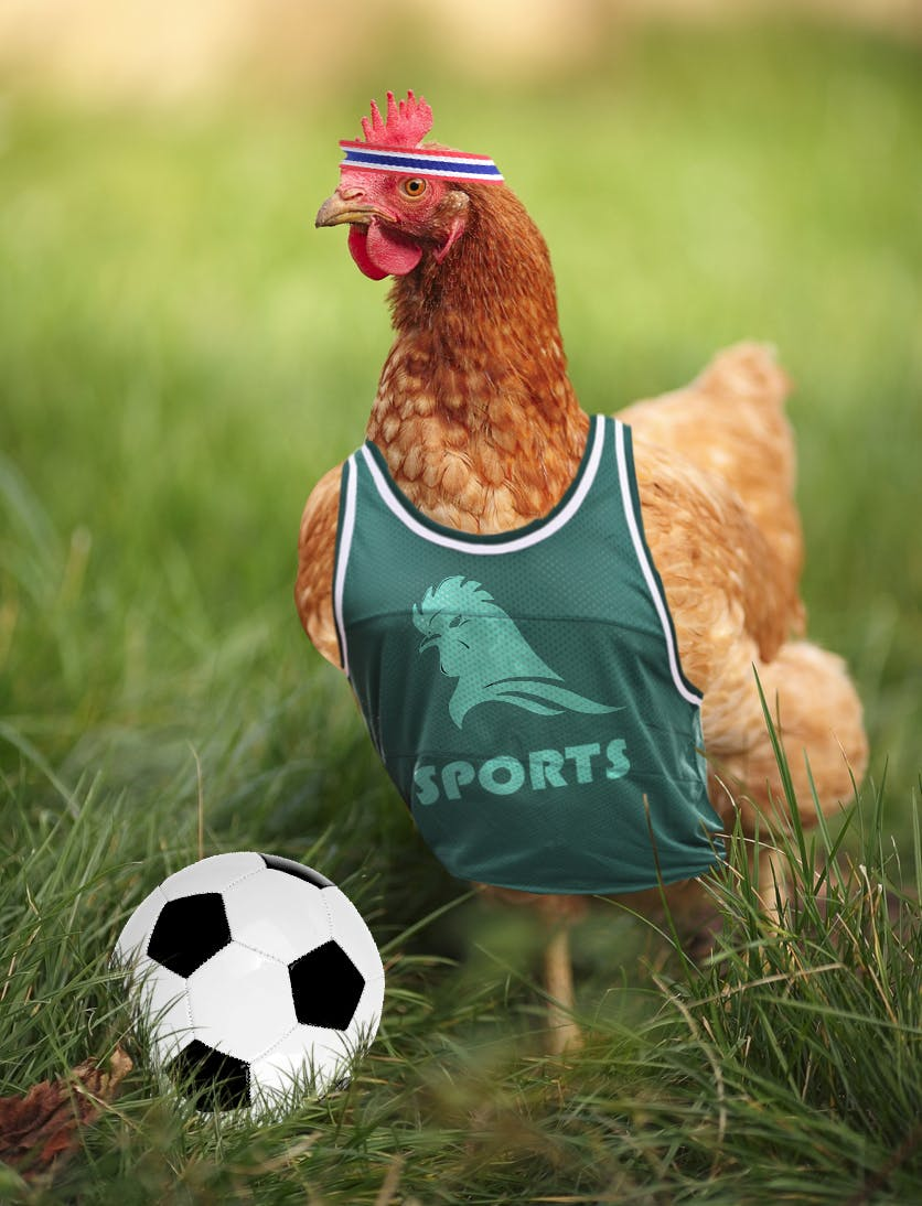 sporty chicken