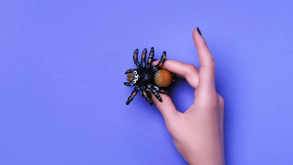 A small, not-at-all scary fake spider