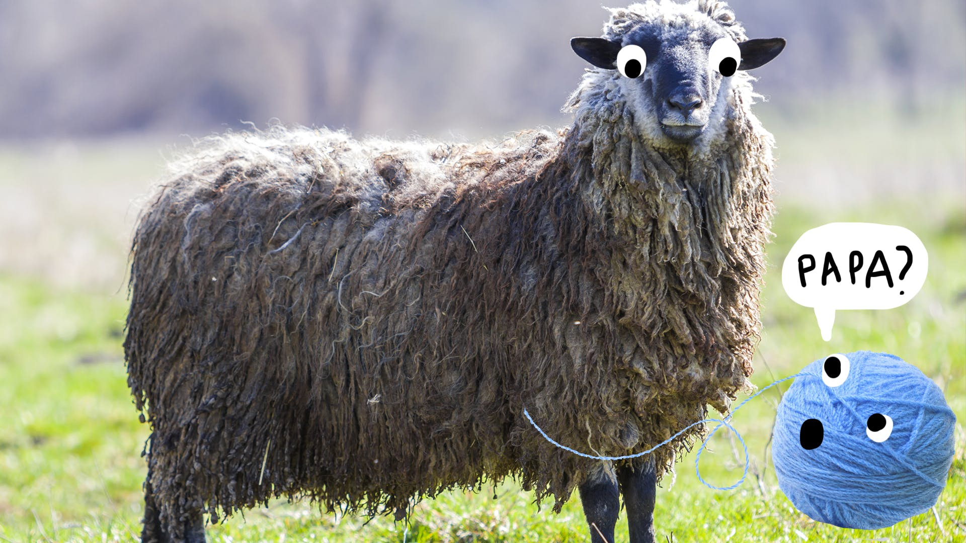 """a ball of wool looking up at a sheep saying """"papa"""" with longing"""