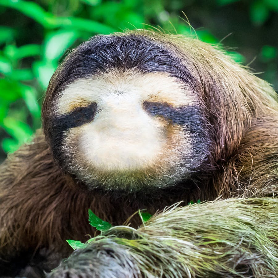 Give This Sloth A Face Draw Animals On Beano Com