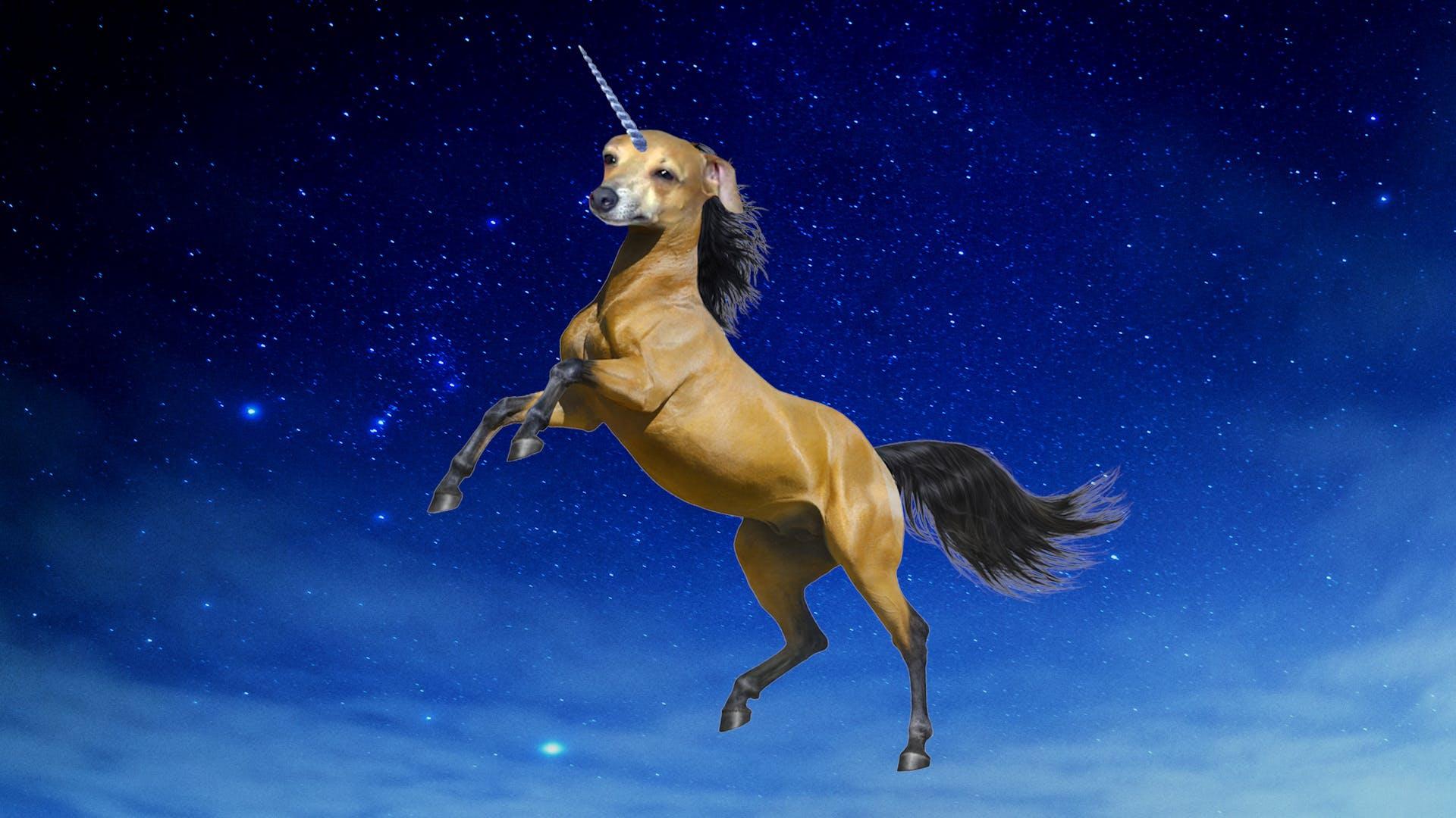 Jenna Marbles dog Peach as a unicorn