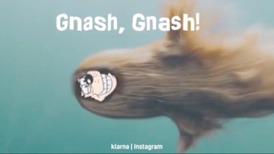 Gnasher swimming underwater
