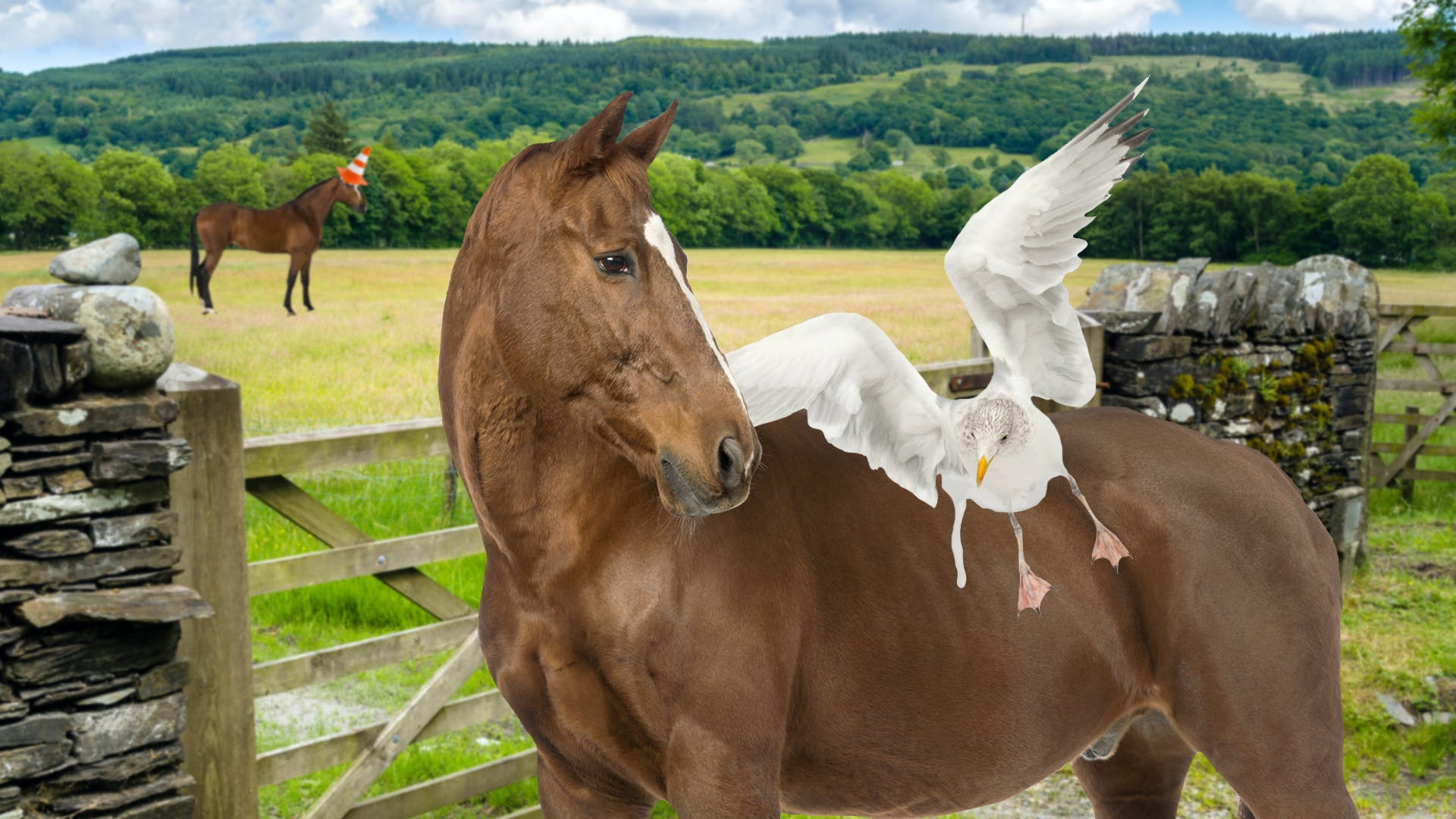 horse with a seagull glued to it's back