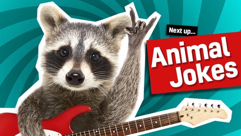 A racoon playing a guitar - follow the link from our dinosaur to our animal jokes