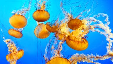 A group of jellyfish in an aquarium