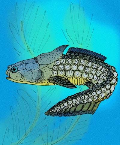 Palaeacanthaspis