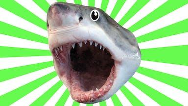 Screaming shark head