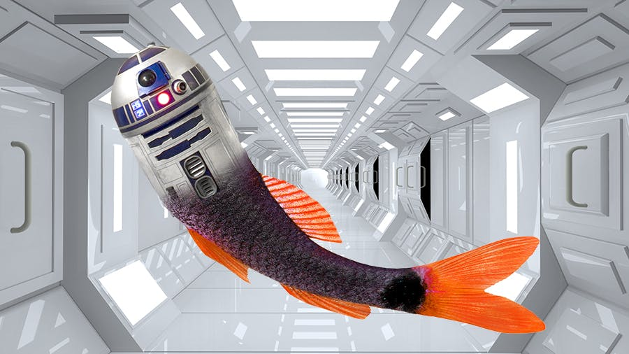 R2-D2 as a mermaid